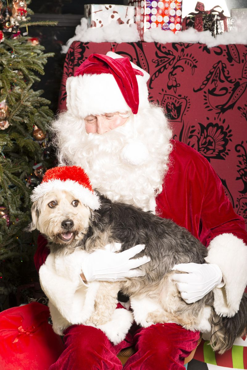 Stanley with Santa