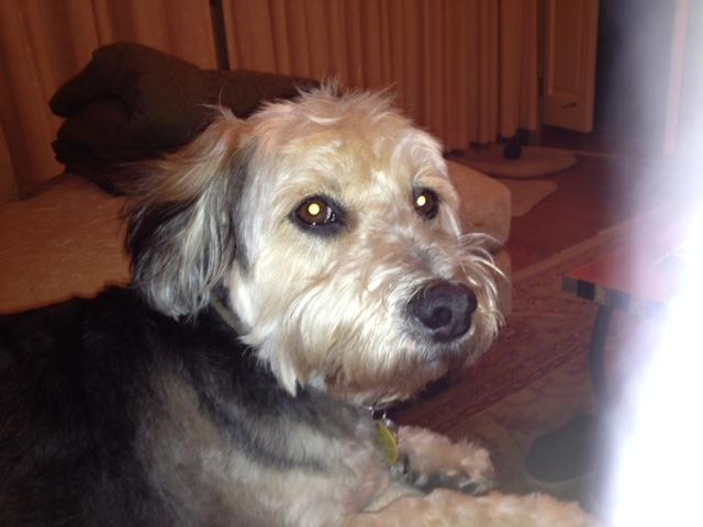 Stanley's new hairdo